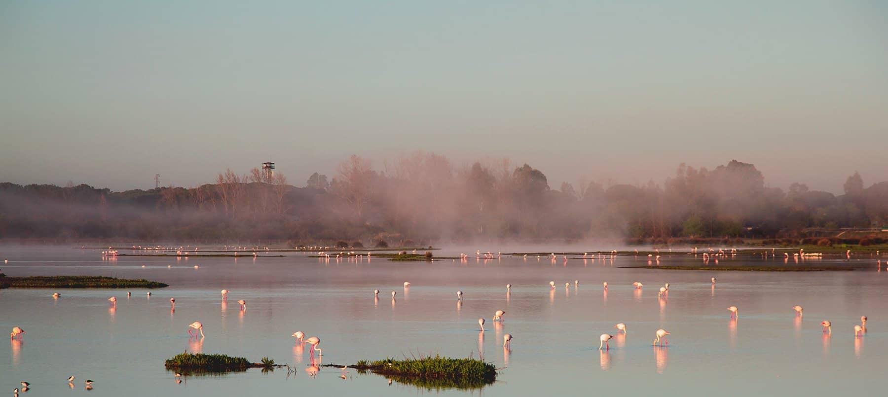 Home - Doñana Reservas
