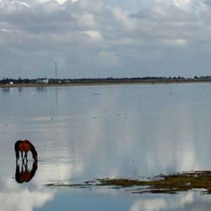 Marismas de Doñana - Doñana Reservas
