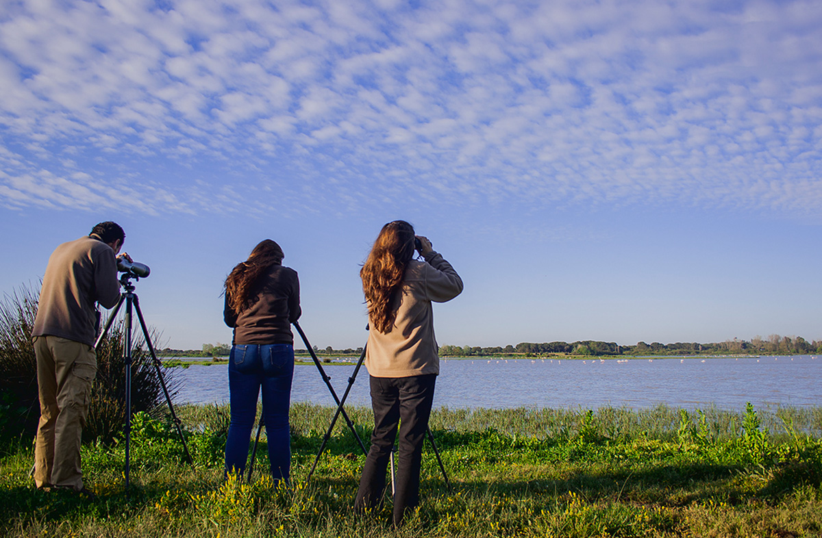 Visita combinada - Doñana Reservas