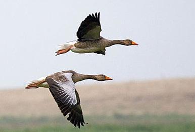 Aves Invernantes - Doñana Reservas