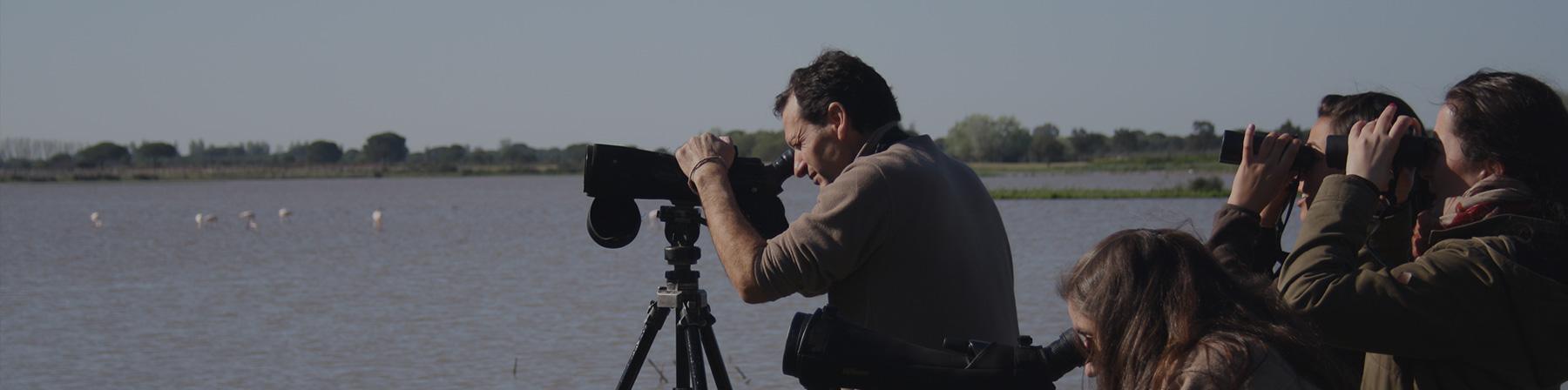 Visita observación de Aves - Fotografía de Aves - Doñana Reservas