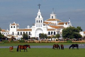 Inicio - Doñana Reservas