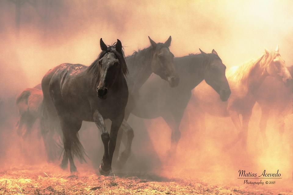 caballos salvajes de Doñana